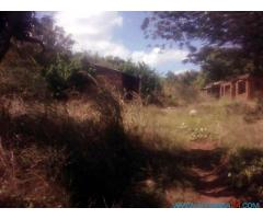 40 HECTARES LAND FOR SALE IN BALAKA