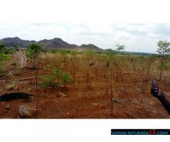 LAND FOR SALE IN LIRANGWE IN BLANTYRE