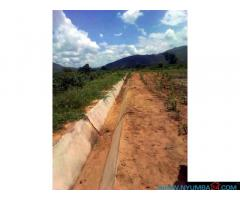 IRRIGATION FARM FOR SALE IN CHIKWAWA