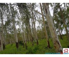 1020 Hectare Farm for Sale in Kasungu