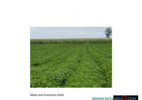 700 Hectare Farm for Sale in Thyolo