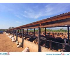 50 Hectare Livestock Farm for sale in Chikwawa